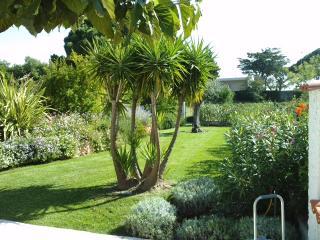 Un arbre taillé dans le cadre d'un entretien de jardin global