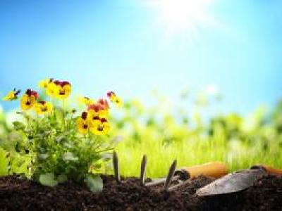 L'été au jardin : les conseils de votre jardinier à Ste Maxime 1/2