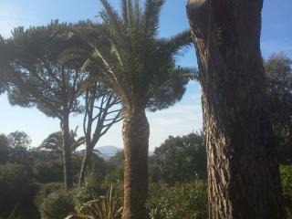 Palmier traité par taille et produit phytosanitaires