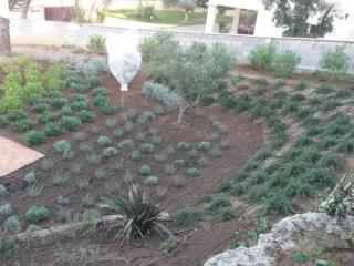 Mise en place d'arrosage automatique autour de plantations variées