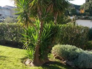Taille d'arbre dans un jardin de la côte d'Azur