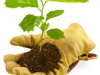 Par quelles plantes commencer ? Paysagiste Ste maxime