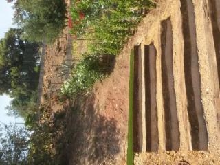 Taille et Entretien de jardin .