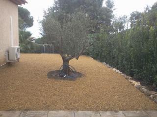 Un olivier planté, taillé et suivi par les jardiniers JCM Paysage
