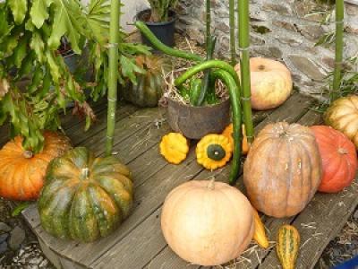 Jardiner en automne - Votre jardinier vous dit tout ! Ste Maxime 83