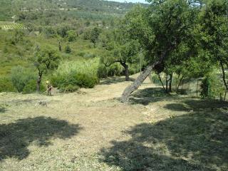 Terrain après débroussaillage des jardiniers JCM Paysage