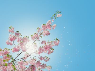 5 conseils pour avoir le plus beau des jardins au mois de mai