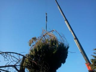 Abattage d'arbres