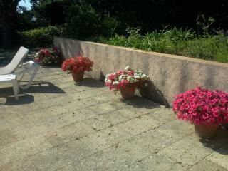 Aménagement de poteries fleuries avec des annuelles , pour décorer une plage piscine .