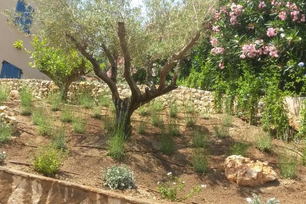Création d'espace vert et jardin paysager