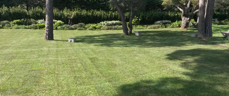 Gazon : création de pelouse et entretien