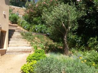 Plantations de toutes tailles  pour un jardin arboré